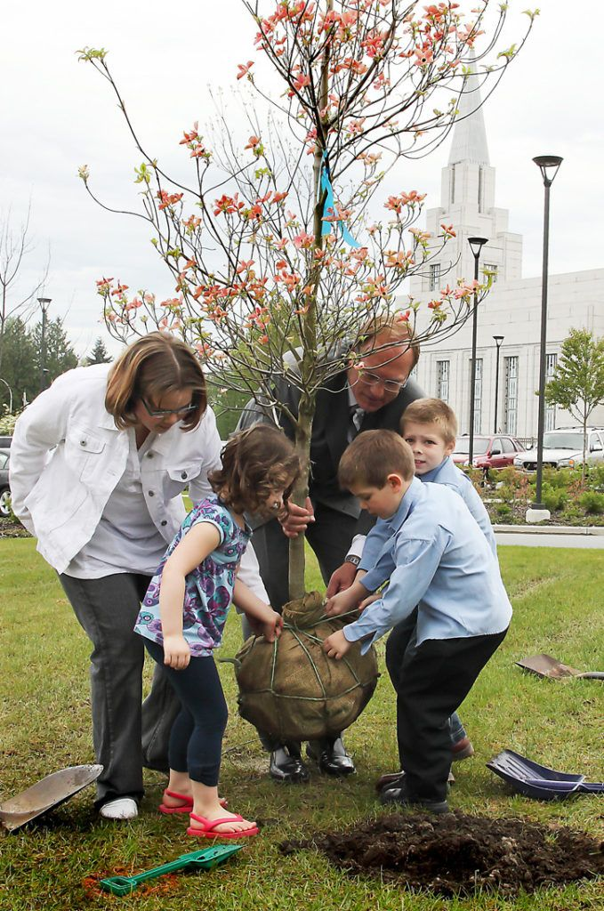 A tree is planted to mark the first anniversary of the Church of Jesus Christ of Latter Day Saints' Langley temple on May 14. Clockwise, from front: Kira Luck, 4, Portia Meynders, 11, elder Paul Christensen and Joseph,7, and Jarom Fischer, 5. About 500 B.C. children celebrated the  anniversary by planting trees  purchased with the pennies collected by the church's young members in their Primary Pennies Project.