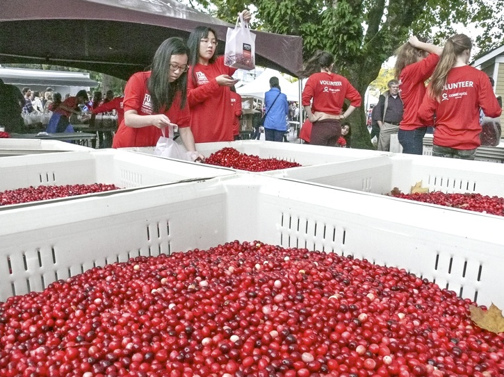 Volunteers bag cranberries at the eponymous festival in Fort Langley on Saturday.