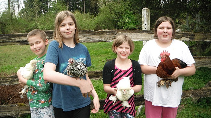 Langley's Giesbrecht siblings, from left, Caleb, 10, Emma, 13, Dania, eight and Annika, 11 hold their pet chickens. Emma is lobbying the Township to allow backyard chicken coops.