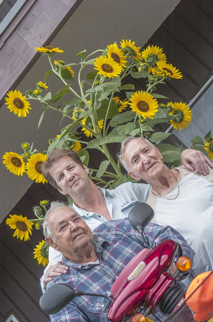 A three-metre tall sunflower plant towers over (left to right) Jim Ross, Kevin Heas and John Okrainetz on Monday, Sept. 22. The trio managed to grow the plant in the Langley City apartment building where they are neighbours.