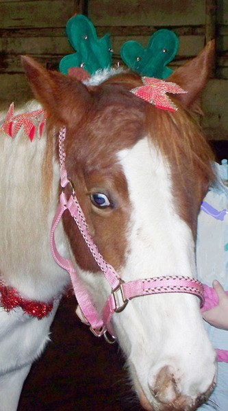 Cindy Lou, who was once abandoned in a Langley field without food or shelter, now has a young sponsor looking after her.