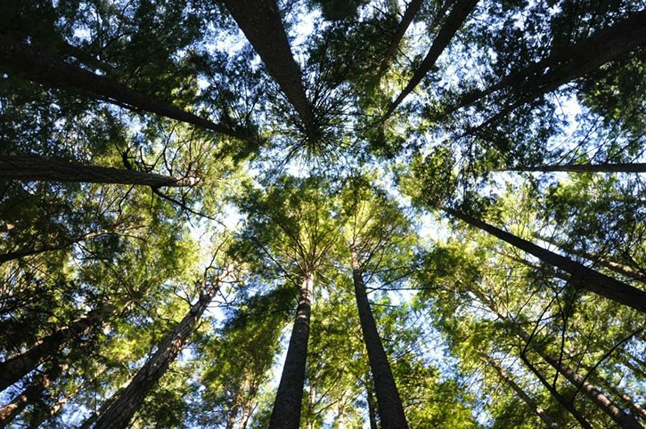 Scientists are uncovering the secret by which trees talk to one another, says biologist David Clements.