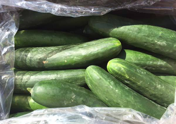 Unwrapped field cucumbers are being recalled by several B.C. supermarket chains.
