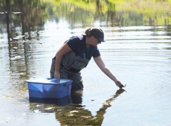 Andrea Gielens, wildlife biologist, releasing turtles back into the wild.