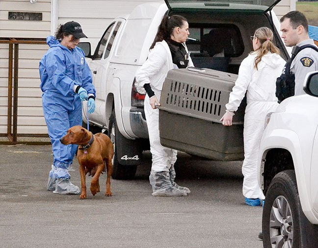 BC SPCA has returned to a rental property on 216 Street in Langley, where they previously removed 88 animals. In total, 17 animals were taken from the property Monday afternoon.