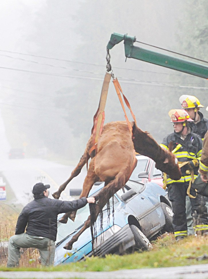 Rescue workers lift 'Buddy' an emaciated gelding from a ditch in the winter of 2008 after the horse was allegedly used to try to tow a car.