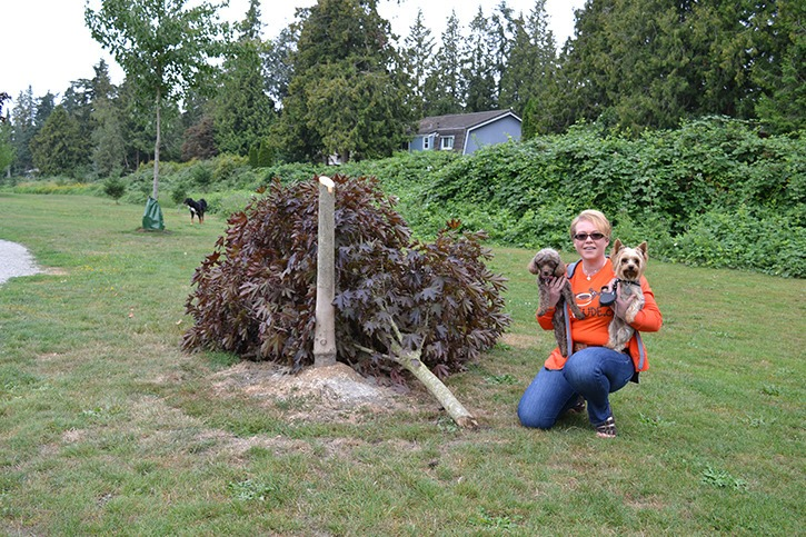 Annette Waterman, owner of Brookswood pet food store PetFude.ca has donated $500 to plant a new maple tree at the dog off-leash park on 206 Street - after vandals cut two trees down there Wednesday (Aug. 3) night.