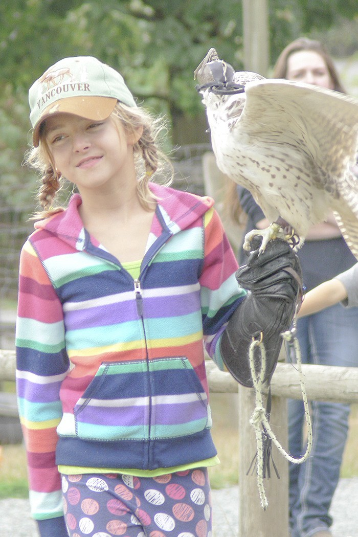 Jessica Johnson, 10, brings out Denarius the Gyrfalcon at the Greater Vancouver Zoo raptors demonstration. The Aldergrove resident worked as a volunteer at the Langley zoo this summer.