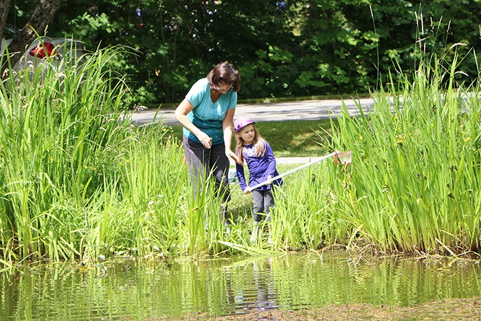 Joanne Rosenthal and her granddaughter Belle Rosenthal searched for frogs, tadpoles and fish during the recent Frog Pond Safari at Campbell Valley Regional Park.