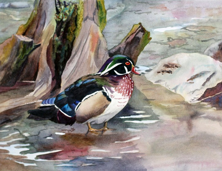 The watercolour piece 'Wood Duck by the Water' by Wendy Mould is one of several pieces that will be featured in the Surrey Artswest Society's spring show.