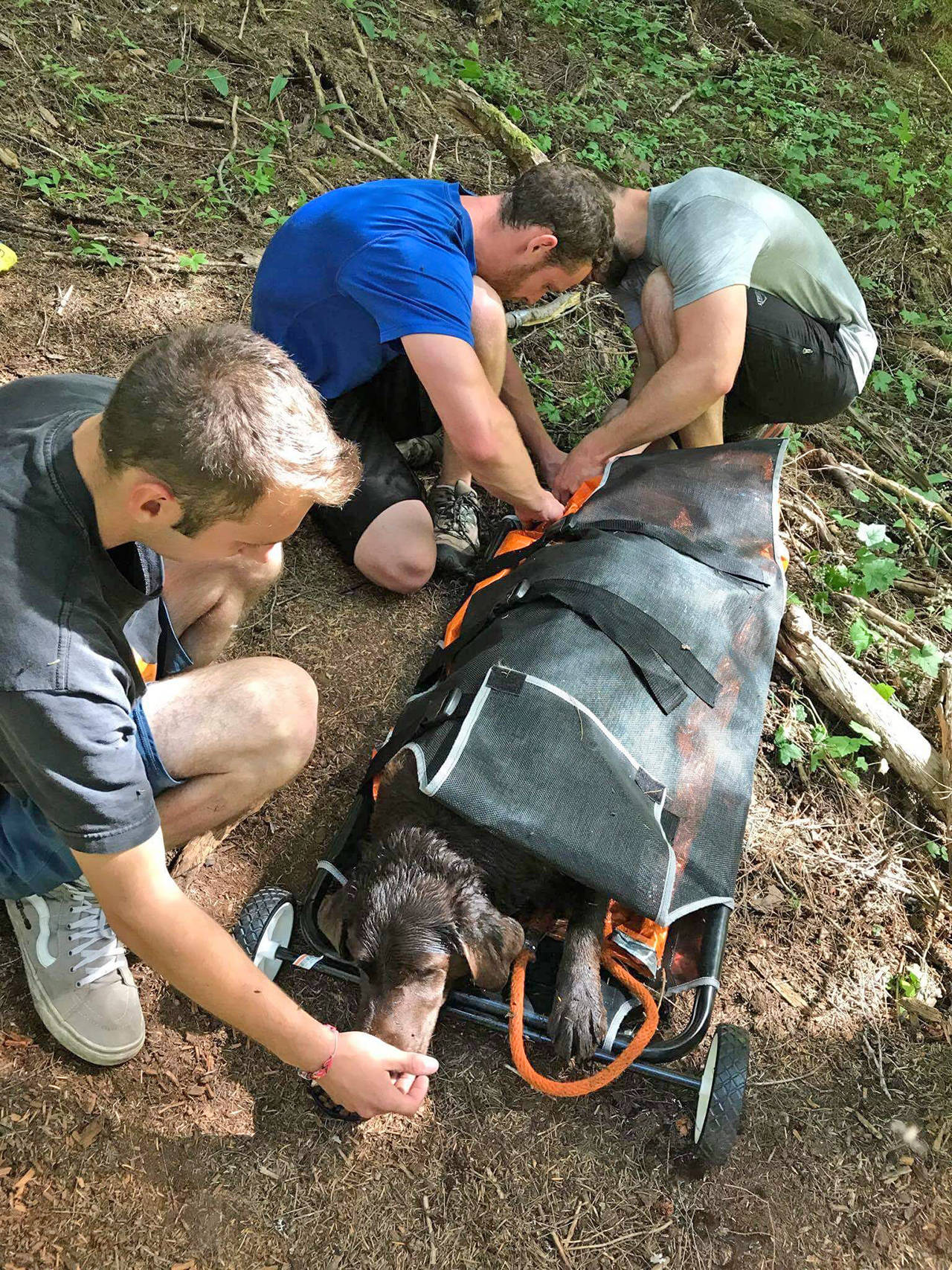 Online hiking club comes together to rescue injured dog near Chilliwack Lake