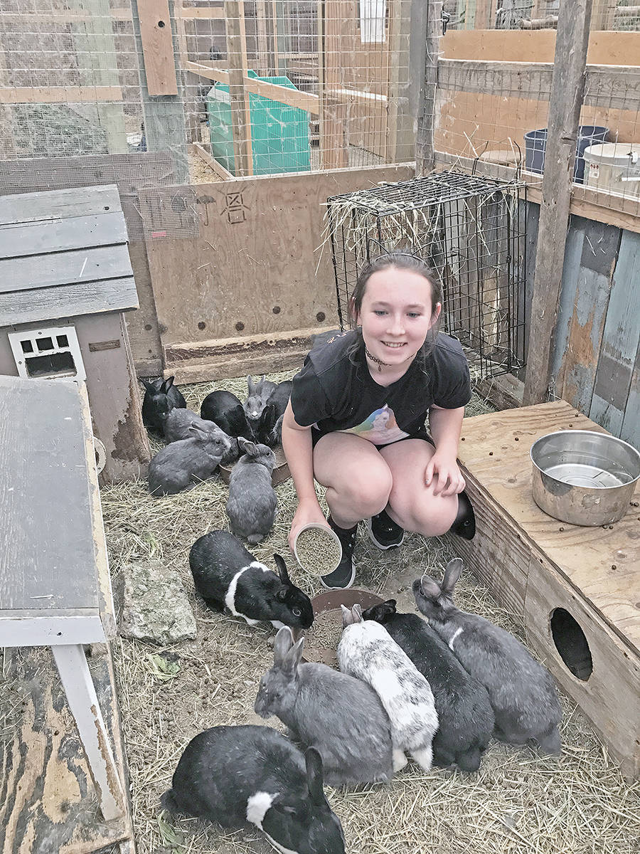 As part of her summer writing program, 12-year-old Mikala Sky McLoughlin visited a refuge for abandoned rabbits and learned a lot about the furry creatures, including that they do not carry disease and are often as easy to train as dogs. Submitted photo