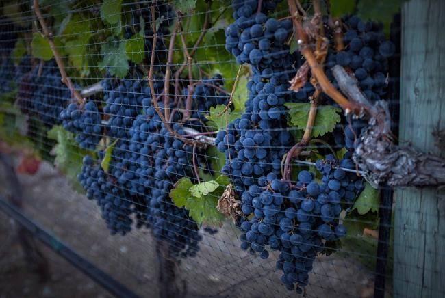 Canadian wine is on NAFTA negotiating table