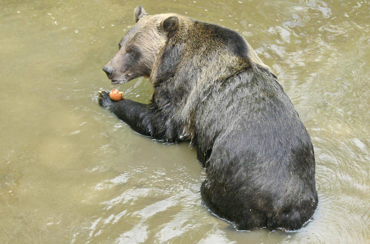 Greater Vancouver Zoo celebrates 47 years in Aldergrove