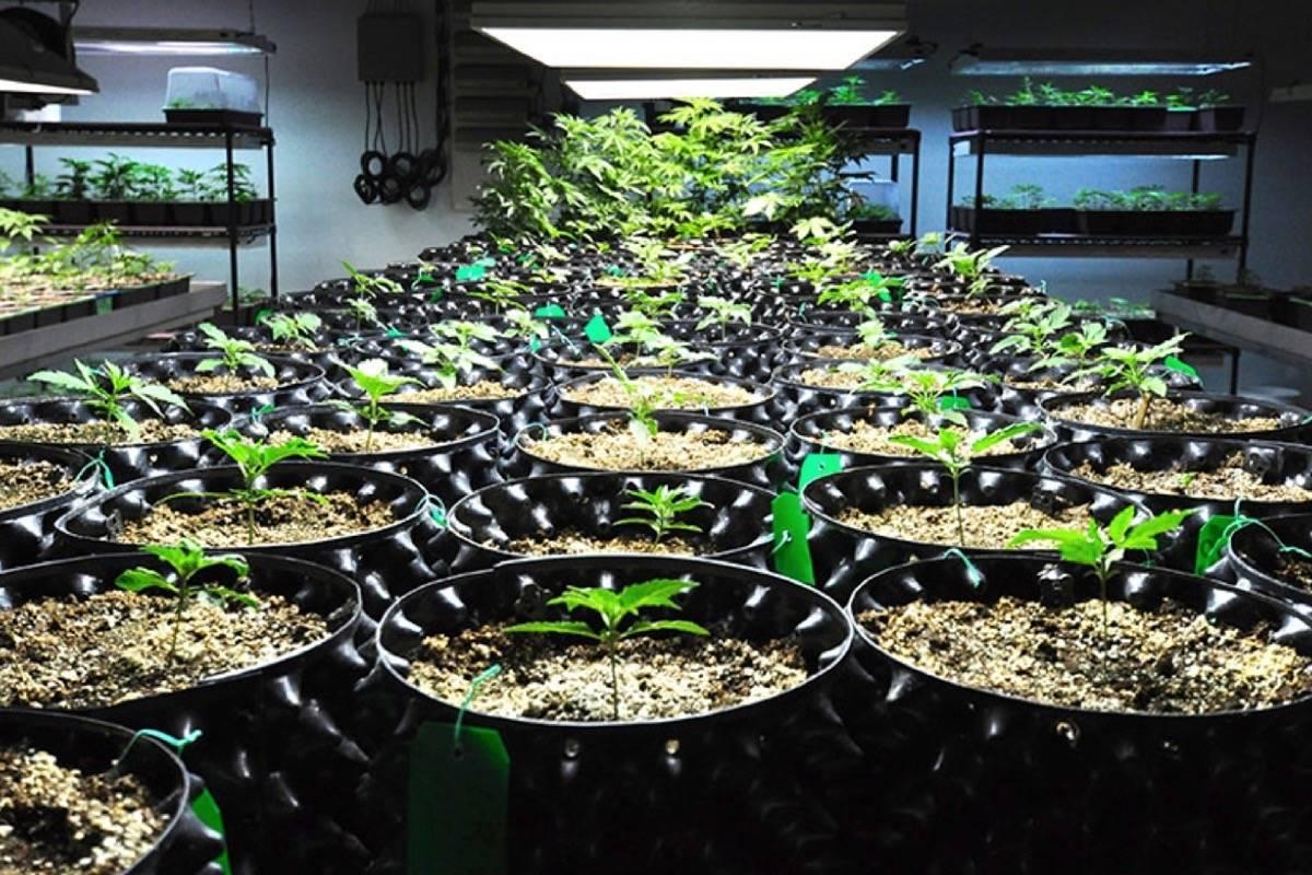 Medical marijuana production facility in Richmond B.C. (Black Press files)
