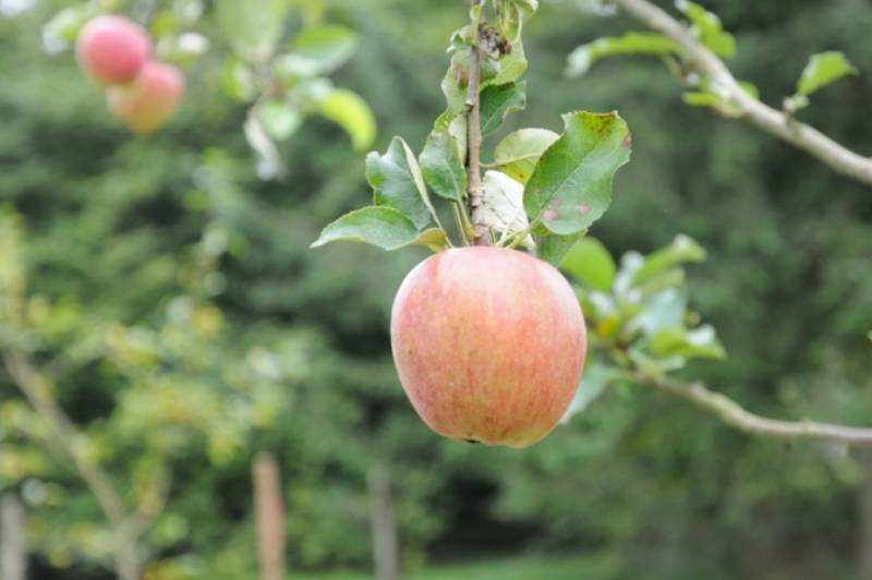 Apple Day is this Saturday, Sept. 30 at Derby Reach Regional Park from 11 a.m. to 2 p.m.                                Picture courtesy of DRBIA