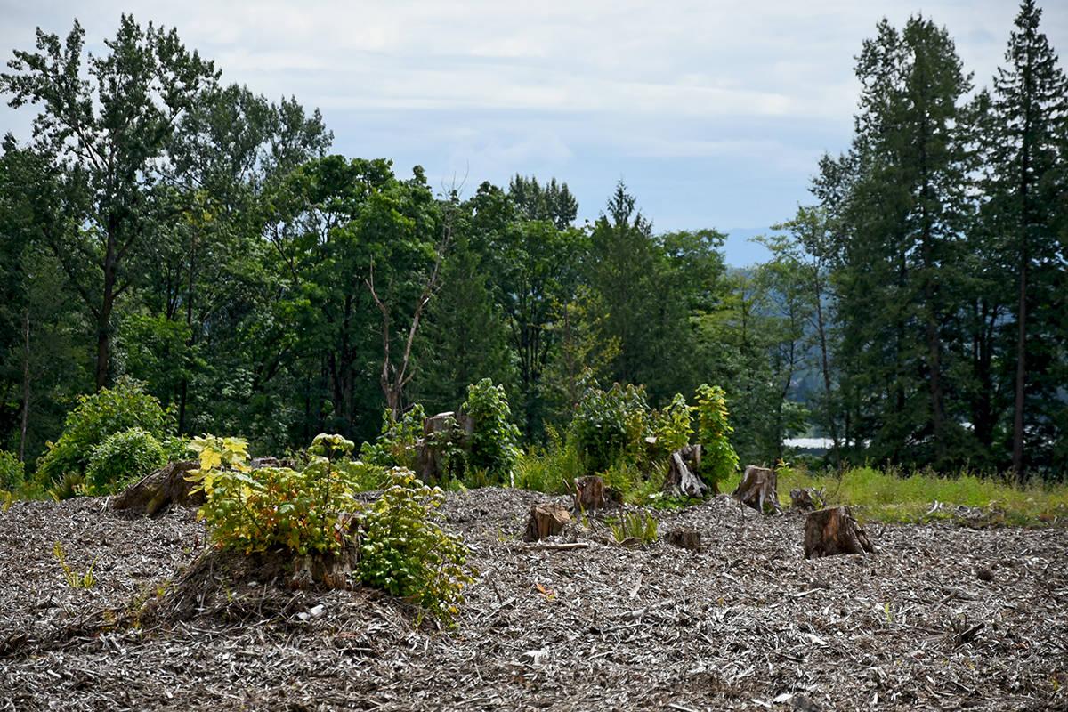 The Tara Farms property in July of 2017. Miranda Gathercole Langley Times