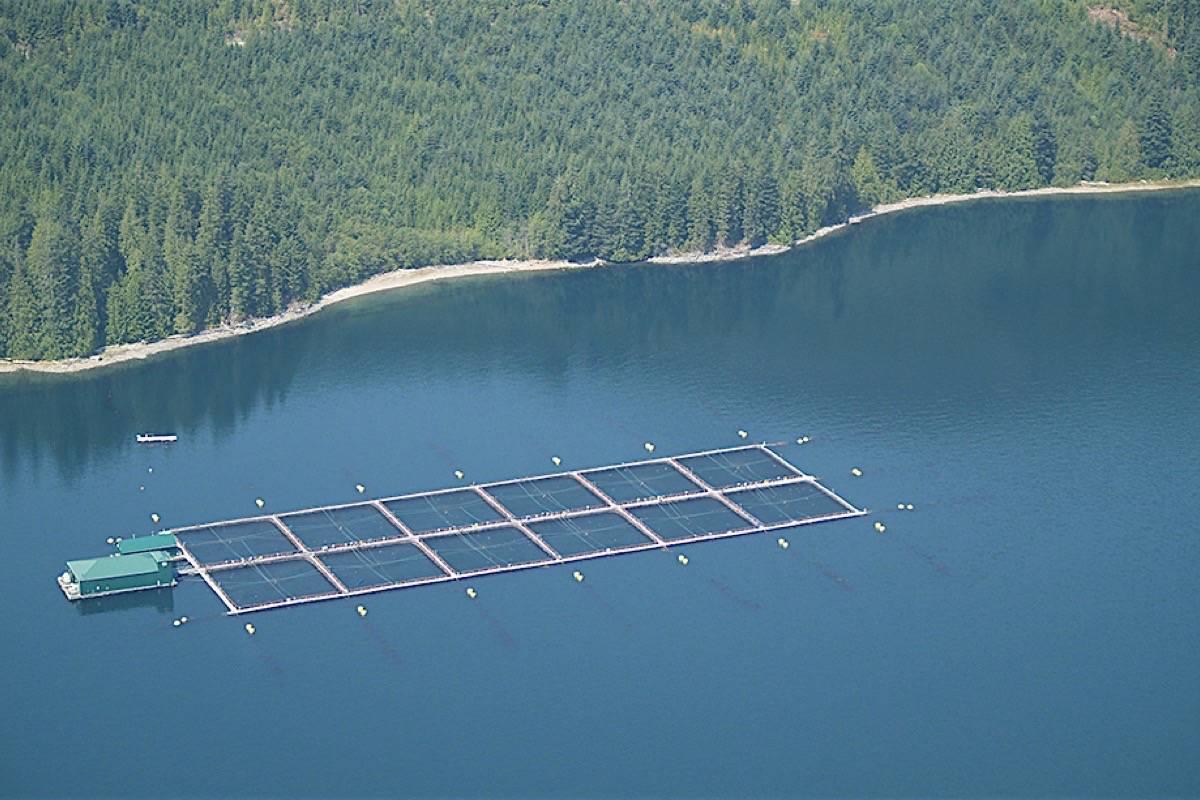 An open-net salmon farm off the B.C. coast at Venture Point (Black Press files)