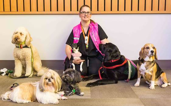 Fraser Health introduces first hospital 'trauma dog' in B.C.