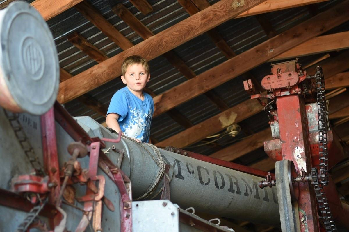 Lachlan Hamer sits on top of an antique thresher that his parents purchased for use on the MacInnes farm. Miranda Gathercole Langley Times