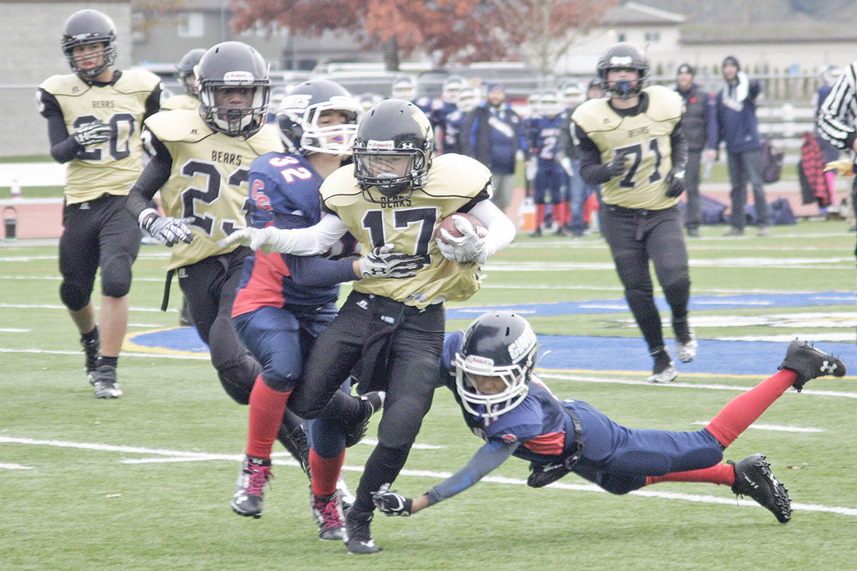 North Langley Bears ball carrier Jordan Tomica wades through the Chilliwack defense during Saturday's Valley Community Football League semifinal game at Mcleod. Dan Ferguson Langley Times