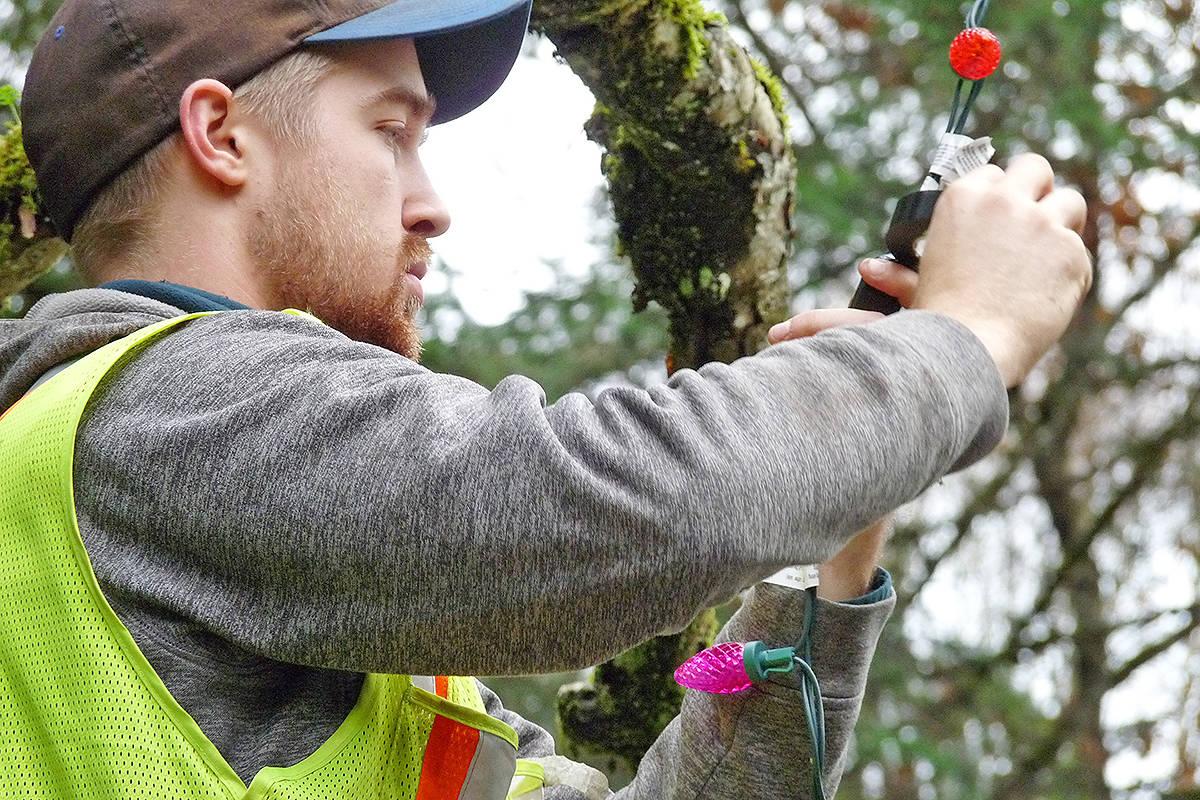 Township of Langley worker Joe Gale strings Christmas lights in Williams Park Saturday. Dan Ferguson Langley Times