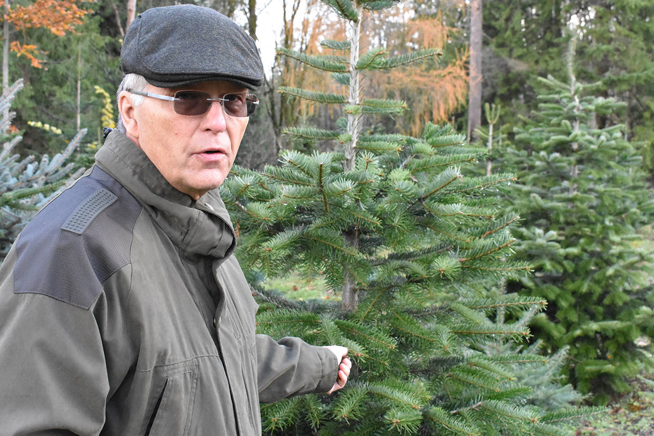 Cloverdale's only Christmas tree farmer says, 'It's not as easy as people think'