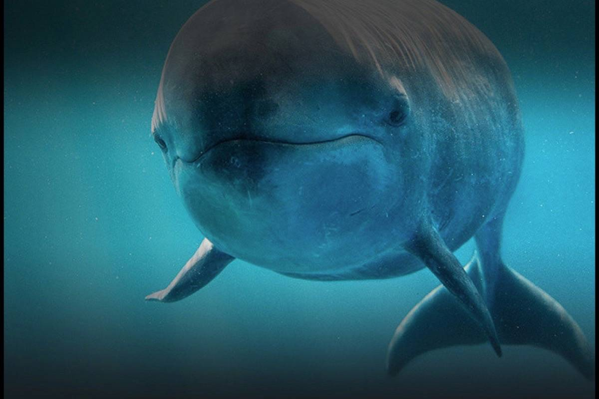 Chester, the three-year-old false killer whale, who died last Friday.