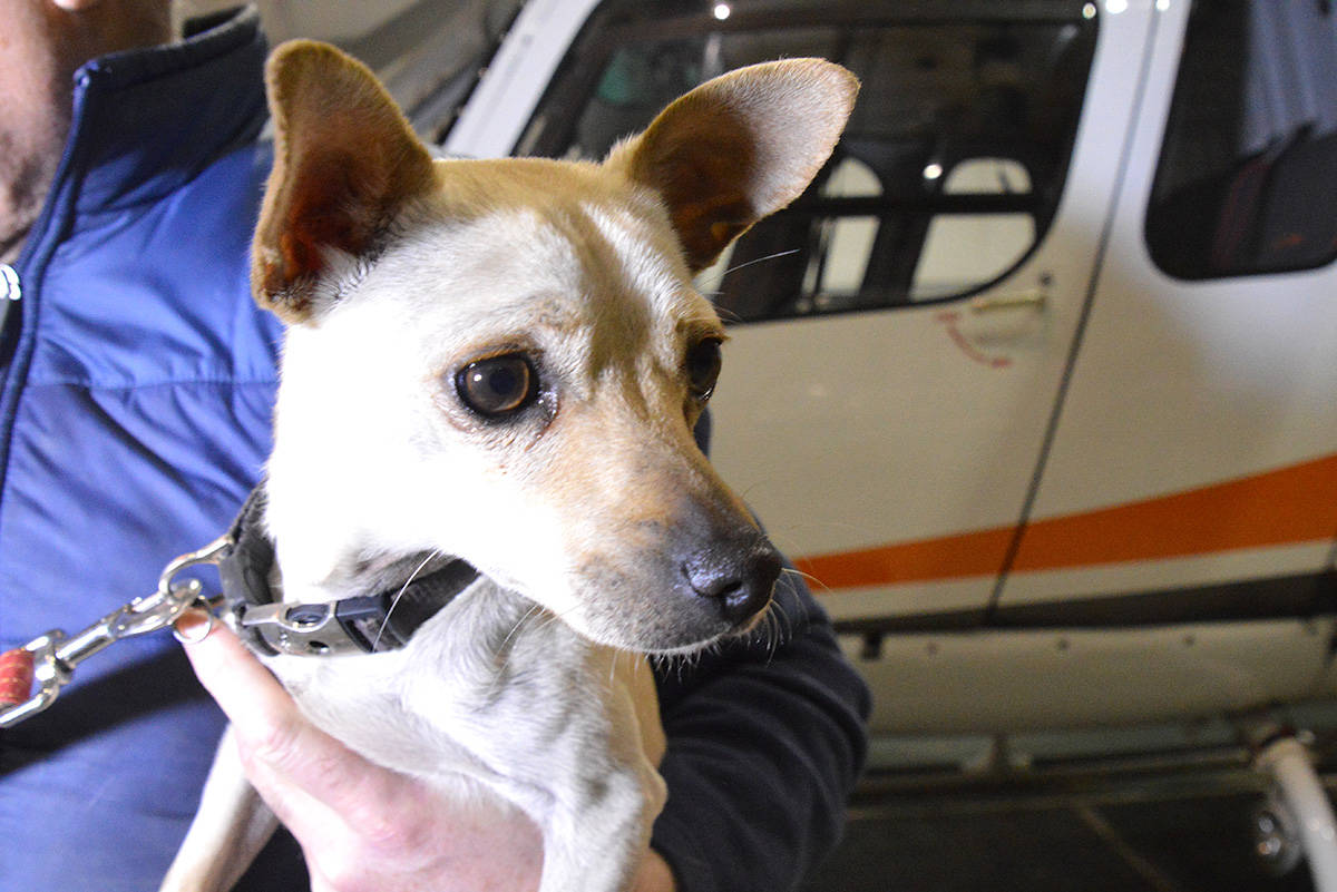 Wildfire refugees: Shelter dogs airlifted from California to Cranbrook