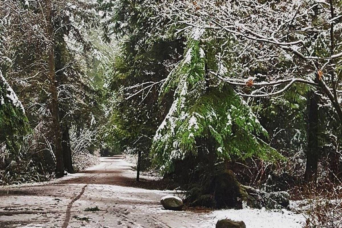A little bit of green still peeks out around the snow in Stanley Park on Tuesday. (Ruben Wills/Twitter)