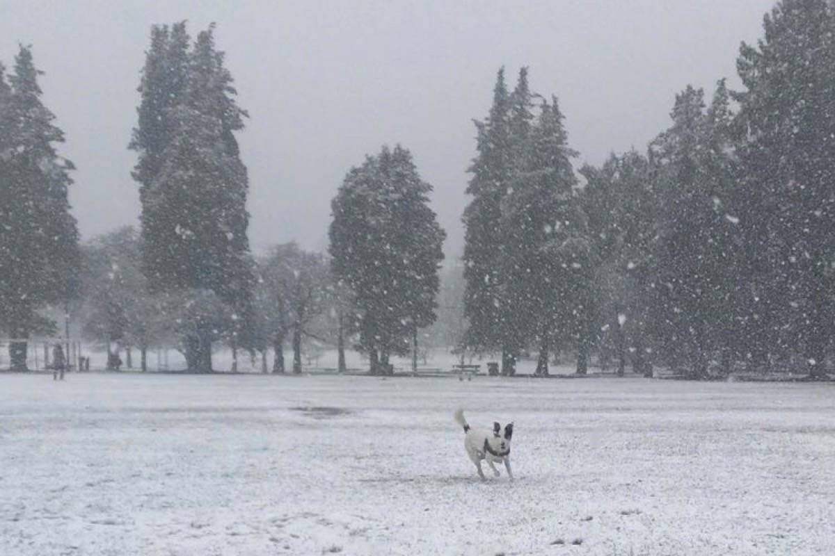 Tyson plays in the Vancouver snow Tuesday. (Val McKinnon/Twitter)