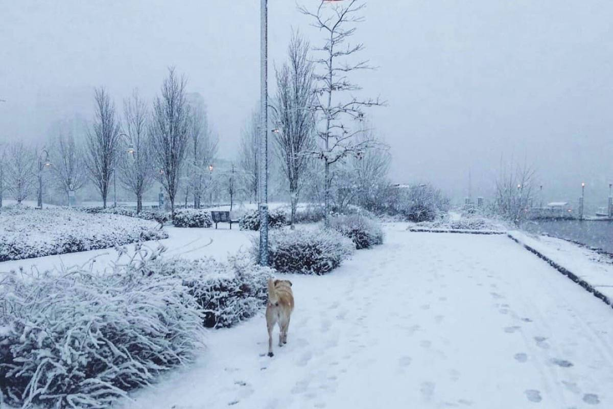 Snow blankets Vancouver on Tuesday. (AdventureHan/Twitter)