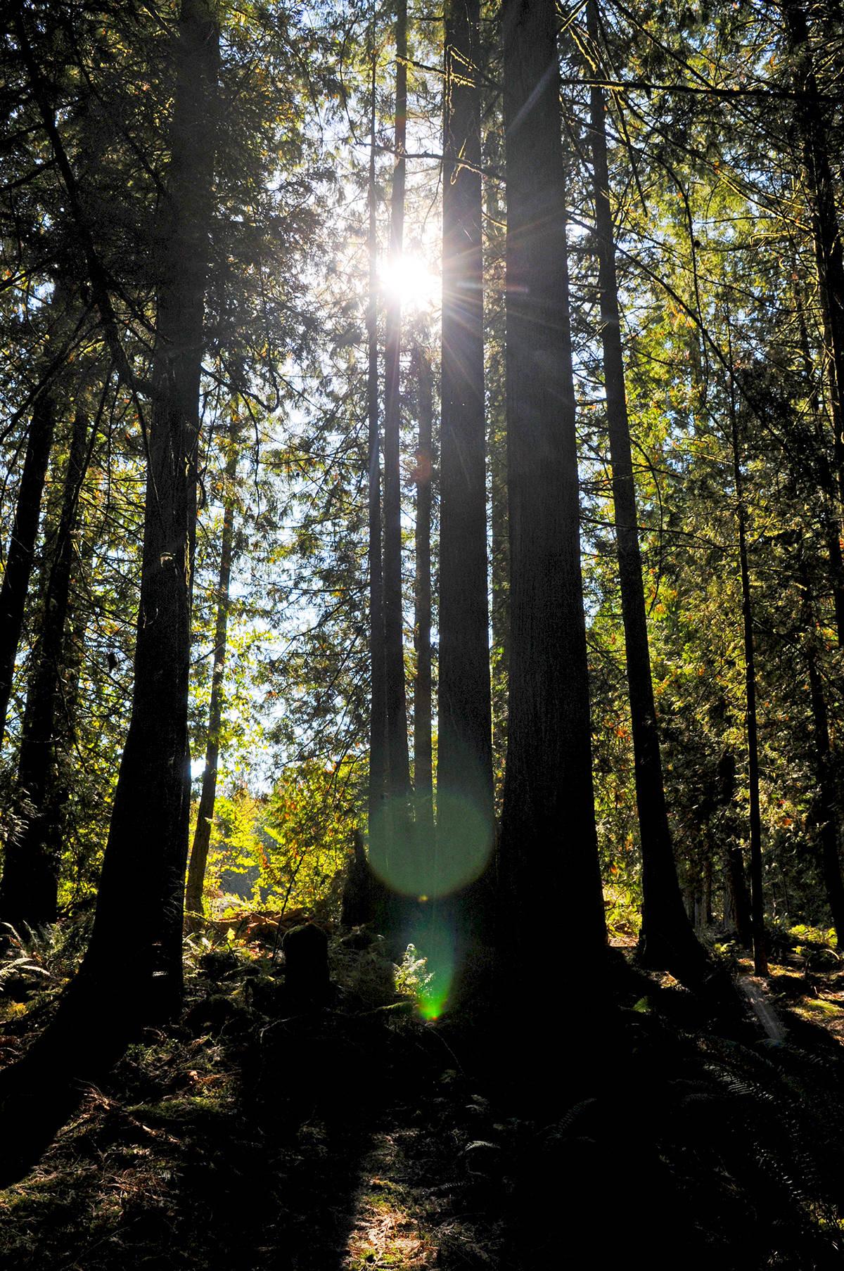 The Blaauw Eco forest. Miranda Gathercole Langley Times
