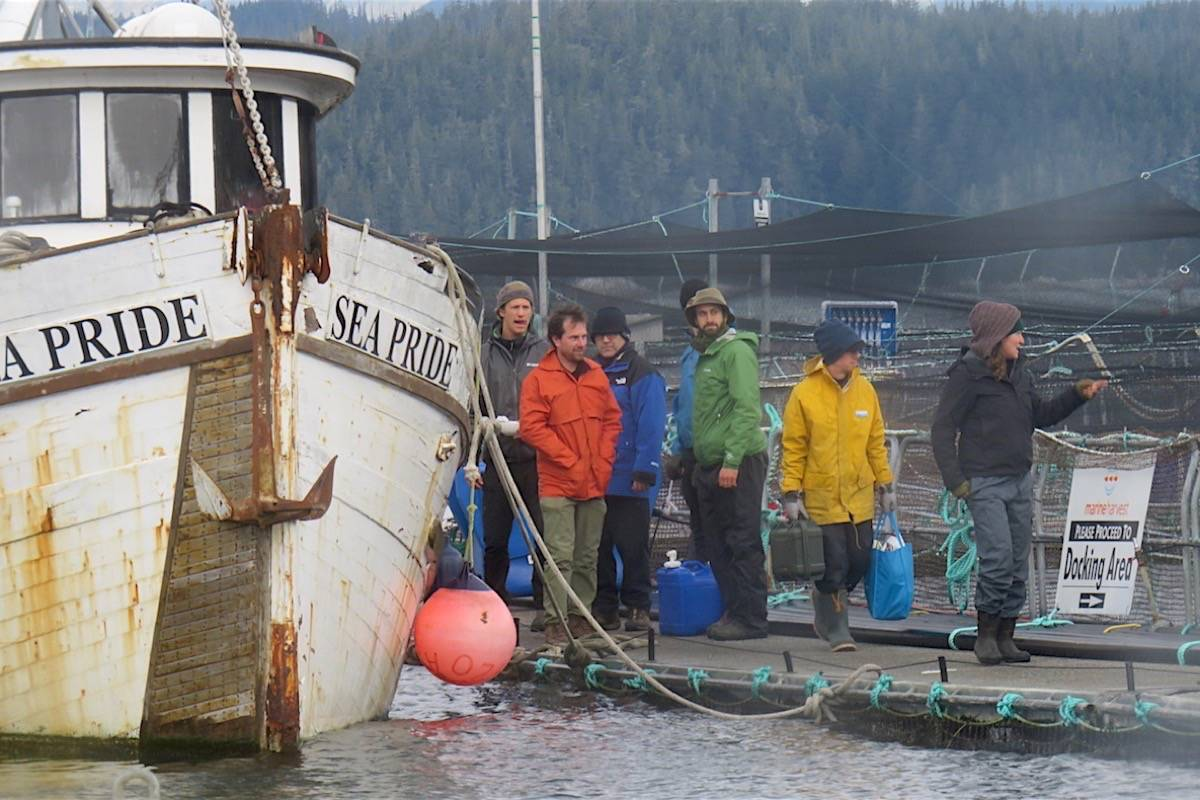 Protester supply boat ties up to Midsummer Island salmon farm during occupation this fall. The boat sank while tied up at a dock at Alert Bay Dec. 19, leaving a fuel sheen and debris above it. (Marine Harvest Canada)
