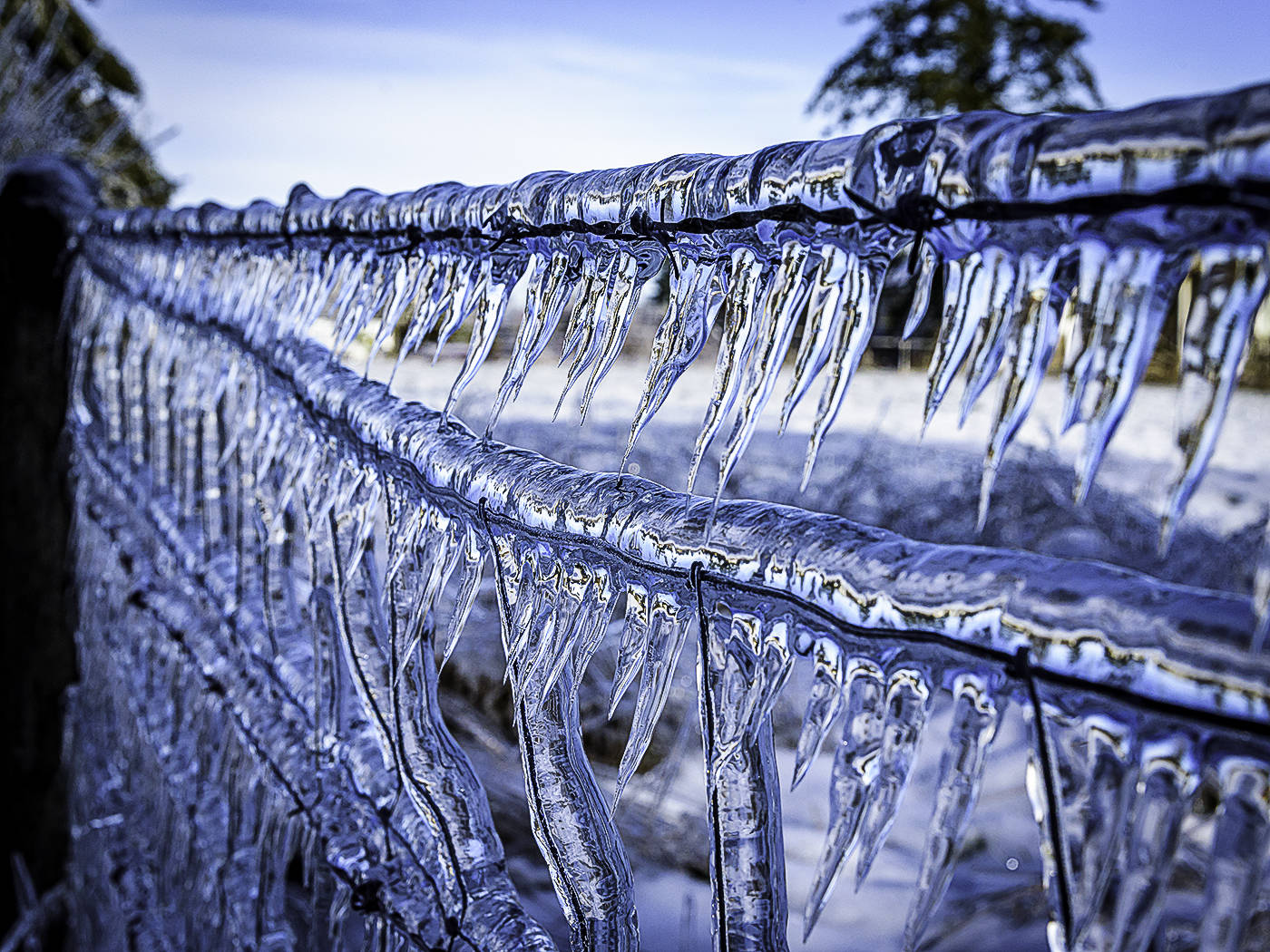 BITING COLD: Langley Camera Club member Tom Truss titled this photo 'Mother Nature baring her icy teeth.' The dramatic image was shot at Aldergrove Regional Park, across the street from the entrance to the bowl, following the recent ice storm. Send your photos of Langley to newsroom@langleytimes.com.                                Tom Truss submitted photo