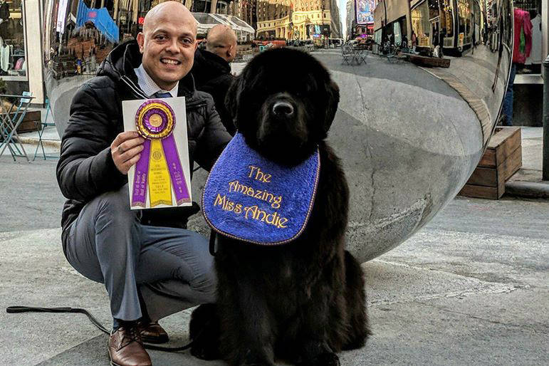 Handler Guillermo Fano with The Amazing Miss Andie, a three-and-a-half-year-old Newfoundland dog, in New York City after winning Best in Breed at the Westminster Dog Show 2018. (Cindy Savory Photo)