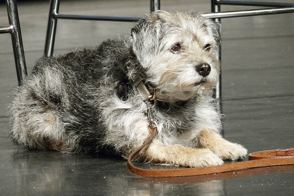 Gidget plays Daisy, the pet of Tremblay's character in Wonder. Dan Ferguson Langley Times