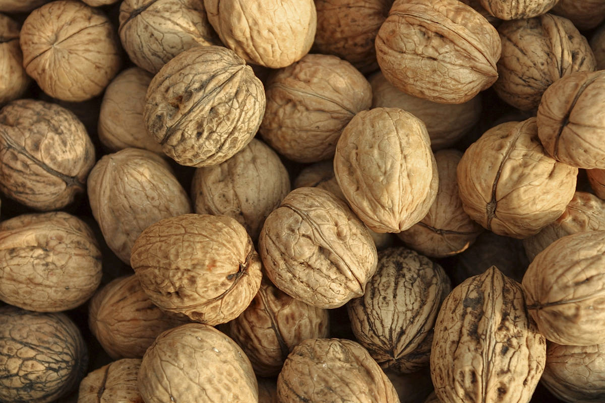 Plea for help found in walnut shell likely a hoax, police say