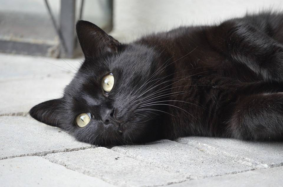 A black cat on Friday the 13th? Could your day get off to a worse start? Pixabay photo
