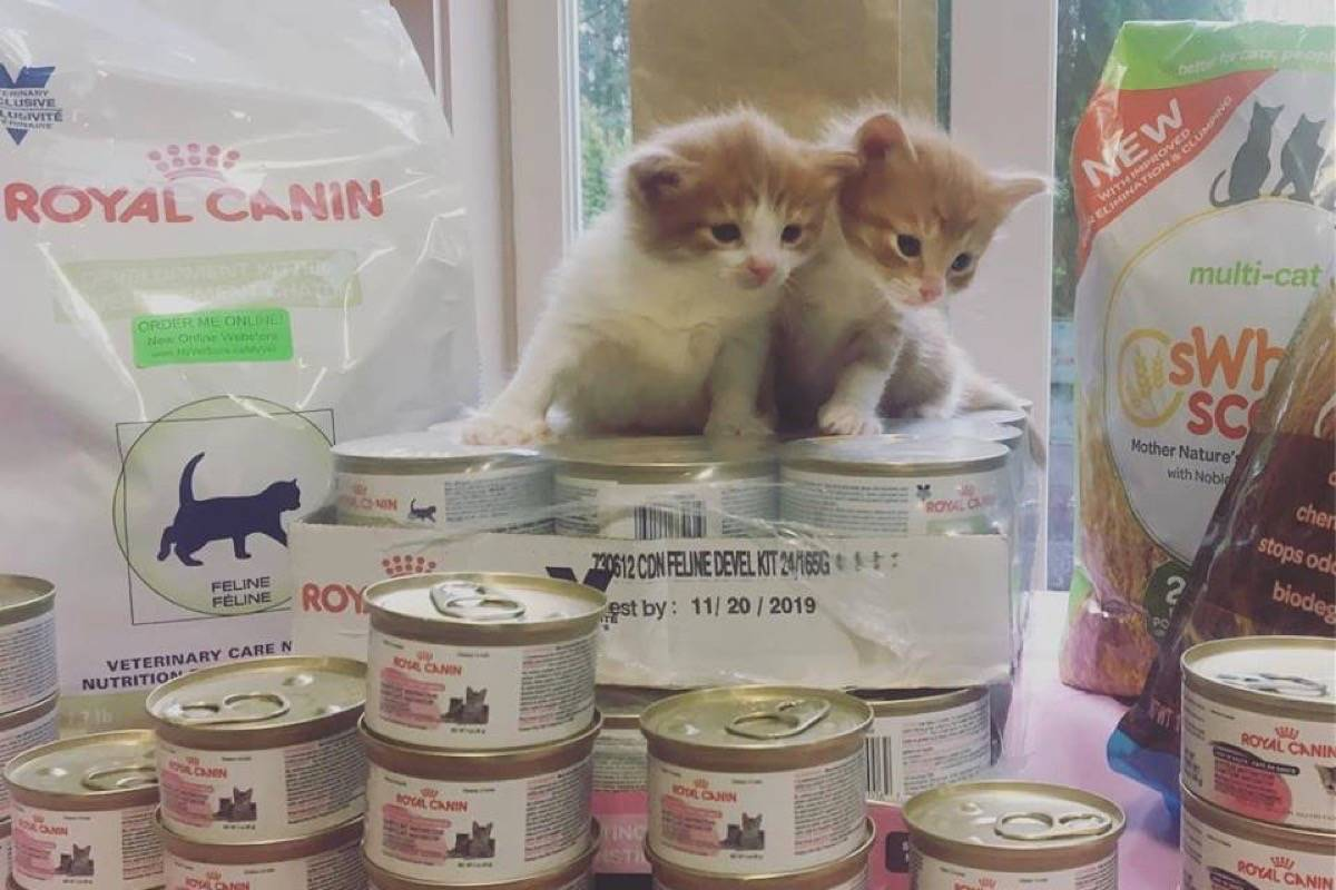 Dubbed the Nursery Rhyme Litter, this pair of kittens came by the Patti Dale Animal Shelter on Monday to say 'thankmew' for all the donations, including the food seen here that came in during the April 14 Kitten Round Up. Submitted photo