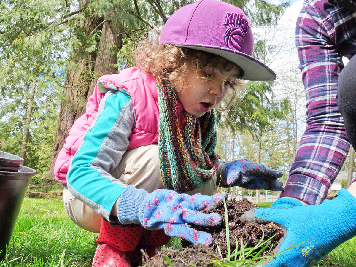 Rosetta Calado, 6, was one of dozens of volunteers planting foliage at the Hunter Park official re-opening on Saturday. Most of the trees in the park had to come out because of an infestation of Laminated Root Rot. Dan Ferguson Langley Times