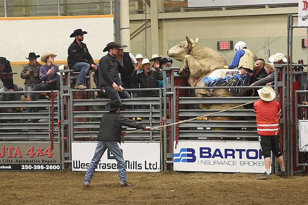 Willie Sellars goes for a ride on C+ Rodeos' Ellis's Holy Roller inside the bucking chutes as Carey Price looks on from the fence. (Angie Mindus photo)