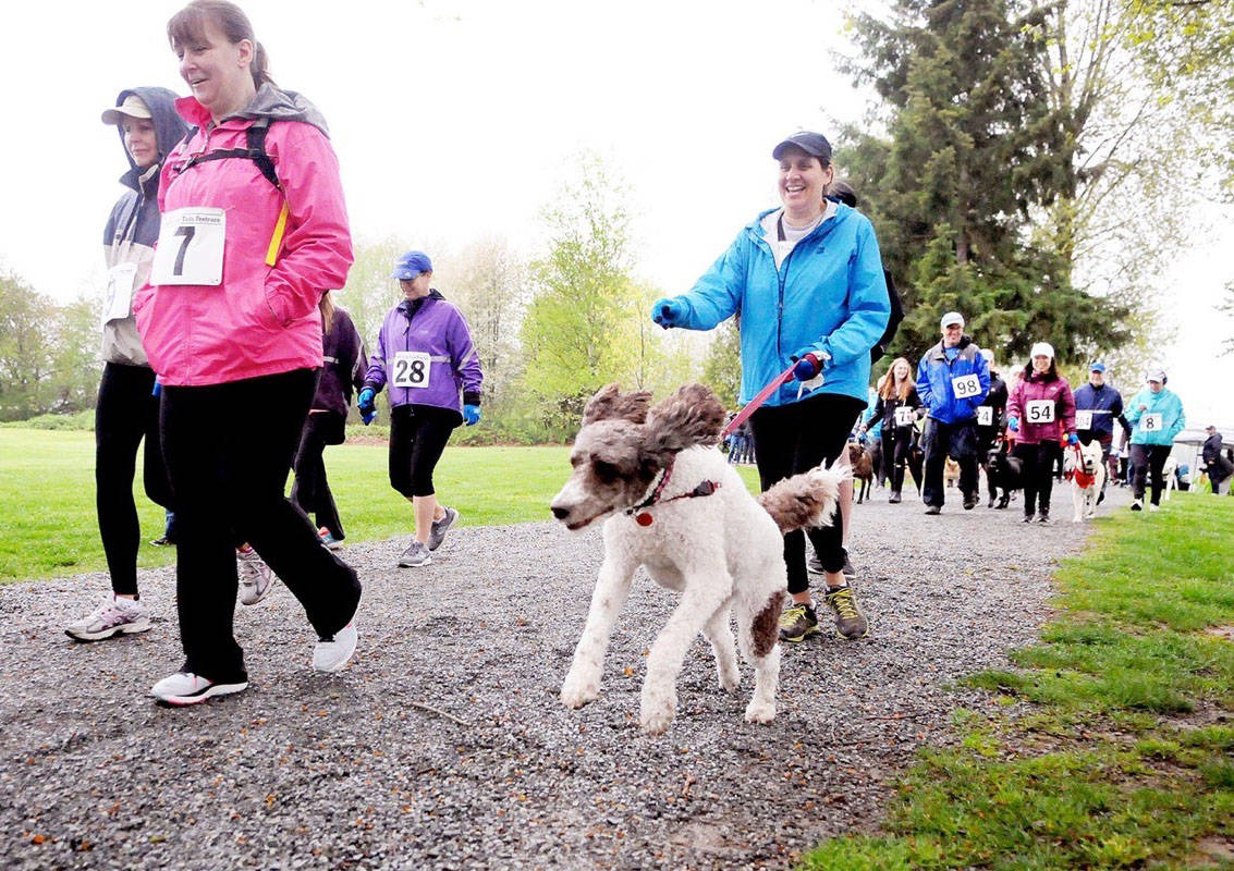 VIDEO: Record participation at Fort Langley's Furry Tails Foot Race