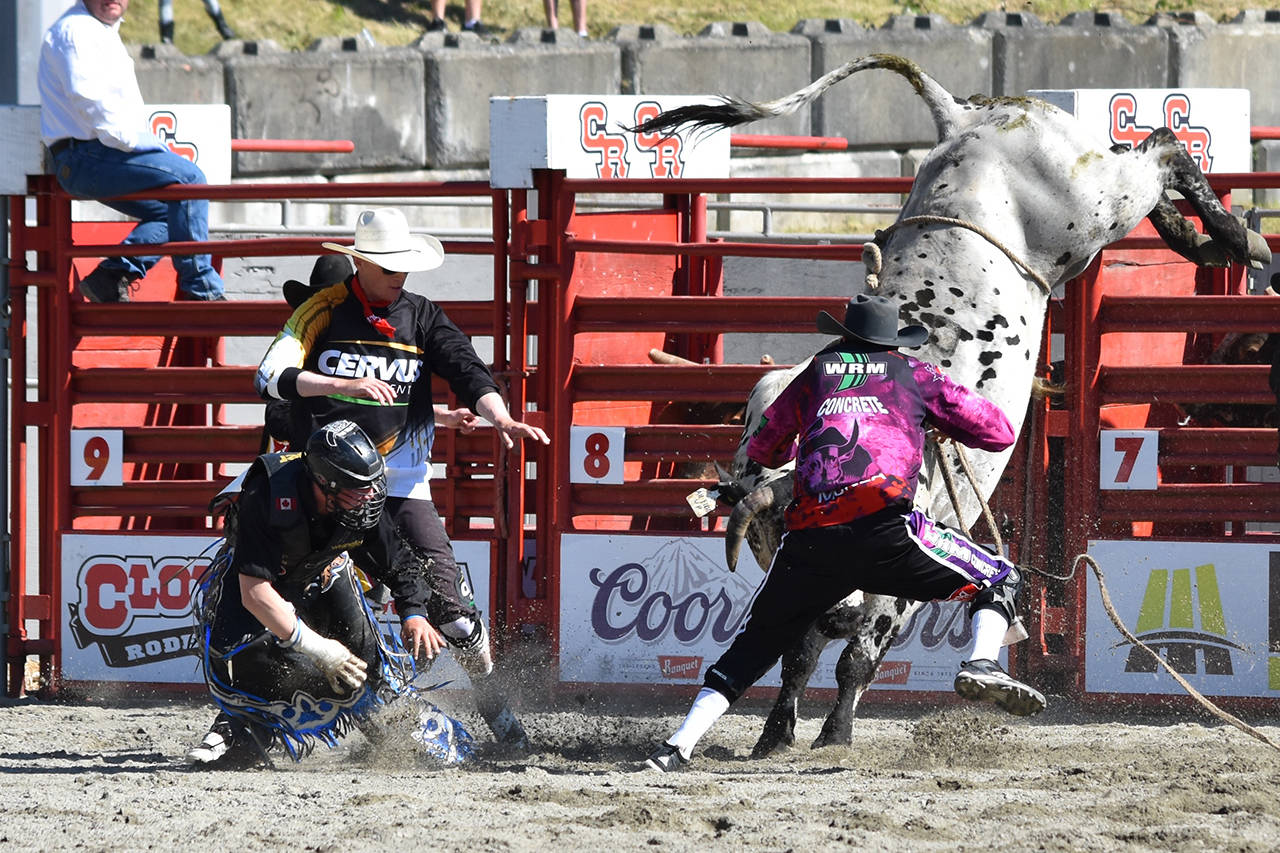 Bullfighters Scott Waye (left) and Brett Monea (right) distract a bull at the 2017 Cloverdale Rodeo. (Grace Kennedy photo)