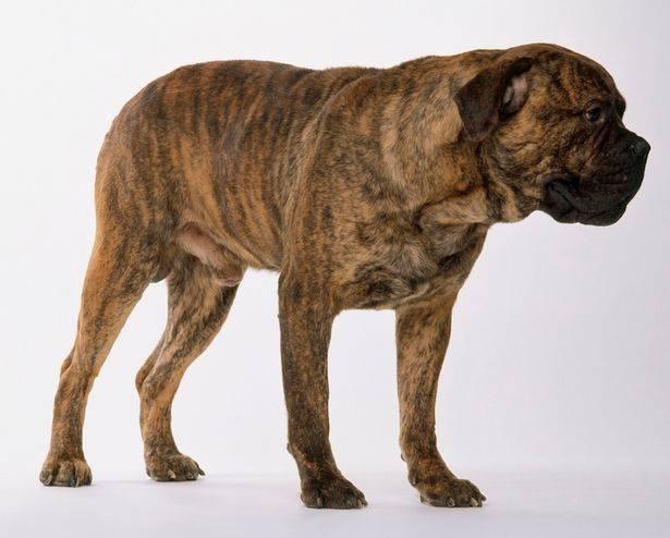 UPDATE: GoFundMe started for woman shaken 'like a rag doll' in Aldergrove dog attack