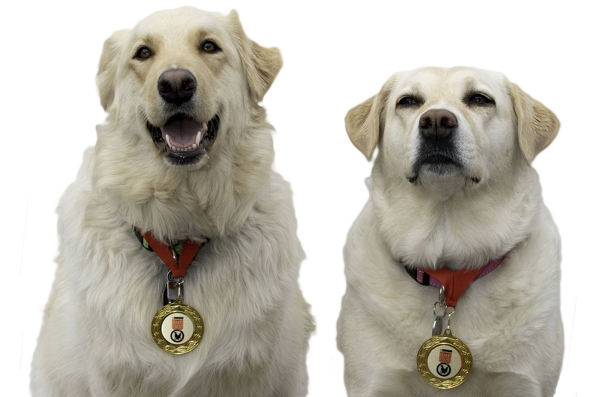Lady and Ruth have been inducted into the Purina Animal Hall of Fame for their life-saving efforts last year to save their owner who crashed off Westside Road. (Darren Hull image)
