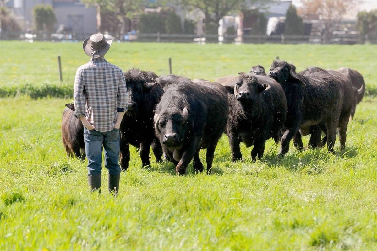 A home where the buffalo roam