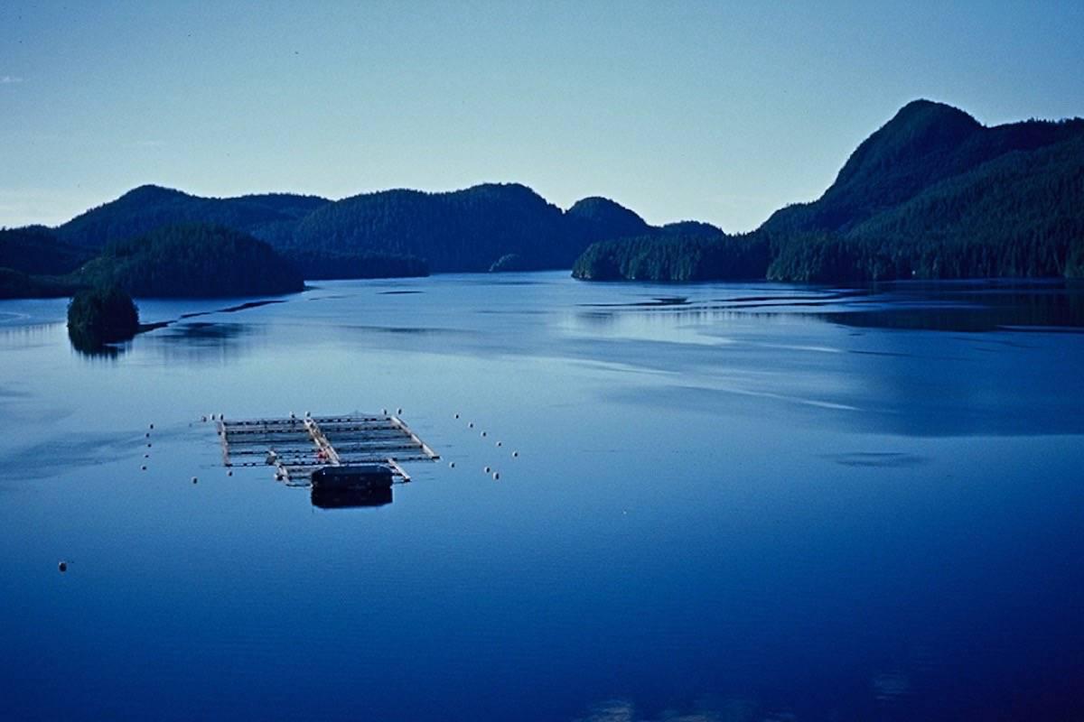 Salmon farm off the coast of Vancouver Island (Black Press files)