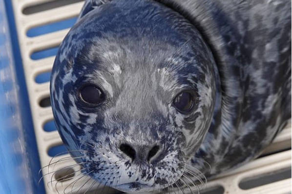 'Not all seal pups you see alone need to be rescued'