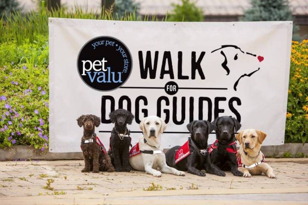 Walk for Dog Guides returns to Fort Langley on Sunday